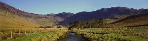 ESA and wetland issues