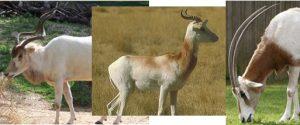 Environmental Animals