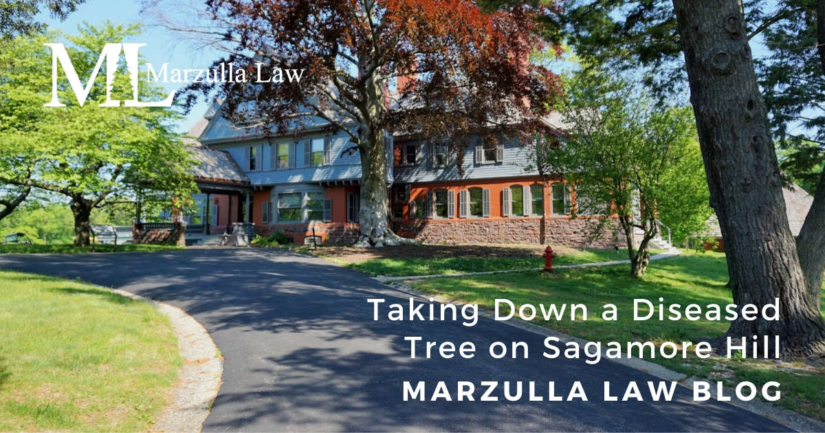sagamore-hill-with-diseased-tree